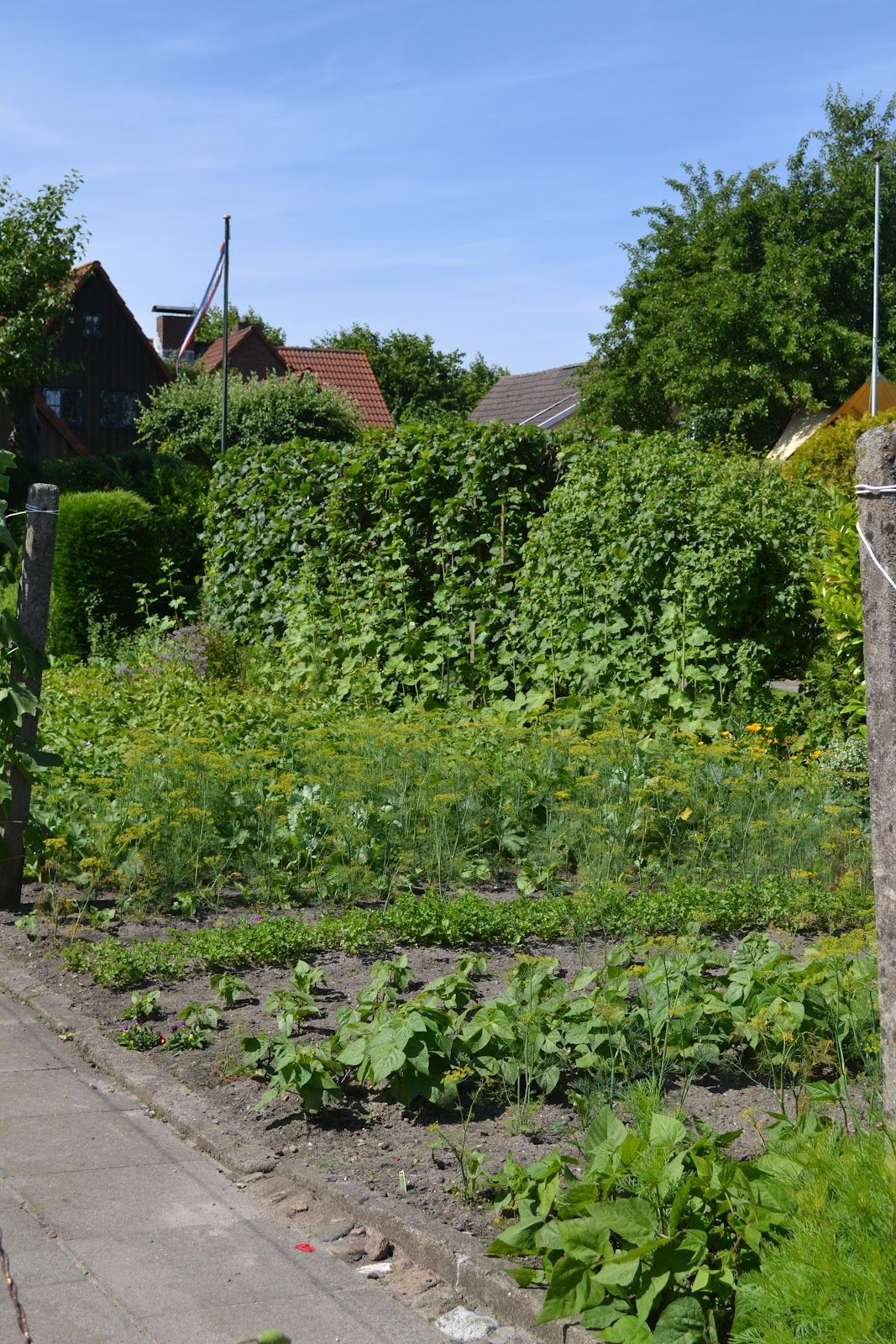 It's amazing that the Swiss think it's perfectly acceptable to have an edible garden in the front--right up to the street. Silly Swiss, don't you know that American homeowners' associations think veggie gardens should be tucked away, out of sight? ;-)