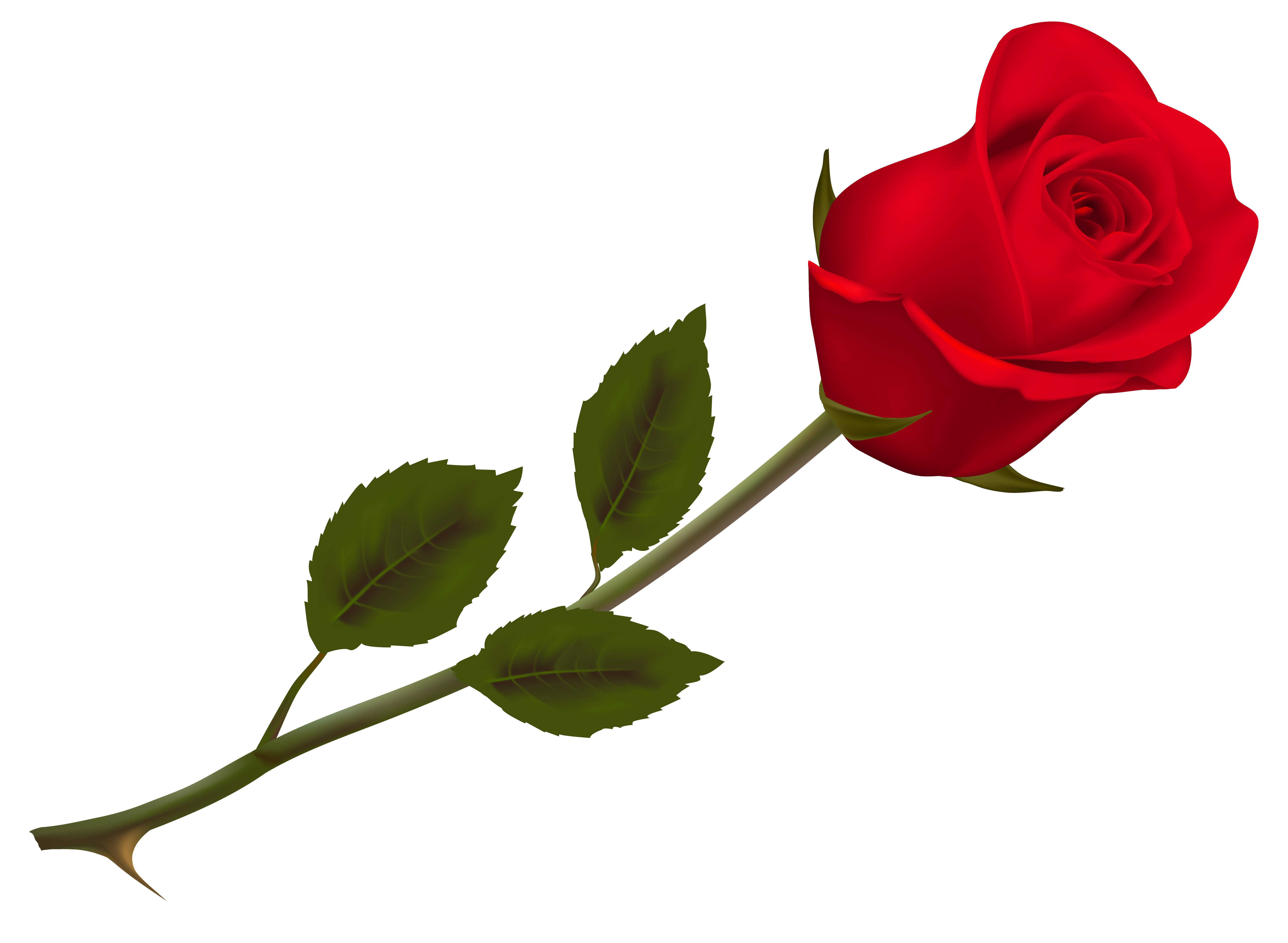 Rose 04 Jpg 6889 5043 Red Rose Png Rose Flower Png Red Roses