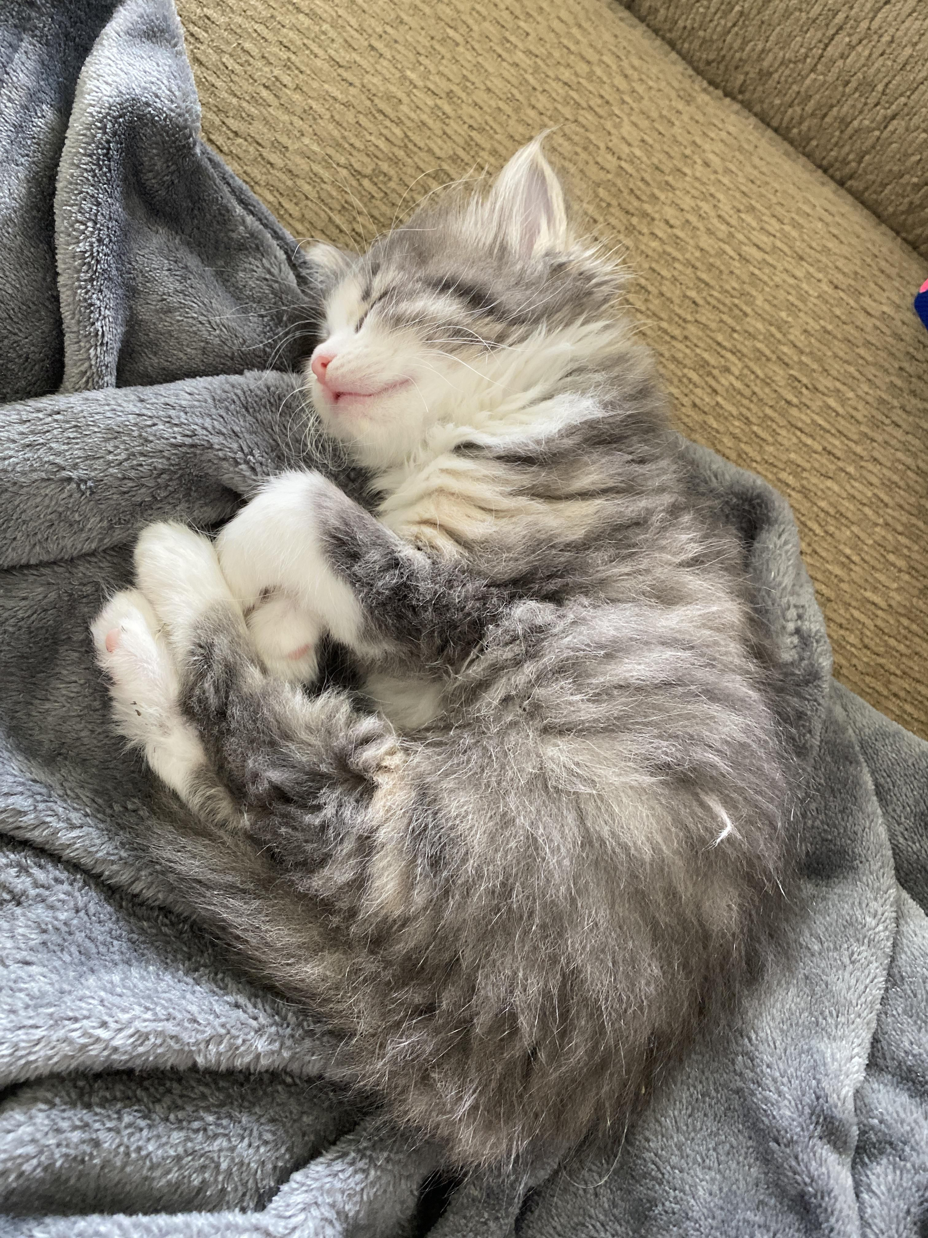 Beanie Finally Pooped In Her Liter Box For First Time And Now Shes Exhaustedhttps I Redd It K1m66tmsqar41 Jpg In 2020 Cats Kittens Cutest Cat Pics