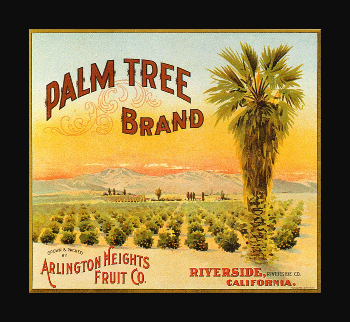 Palm Tree Brand Oranges
