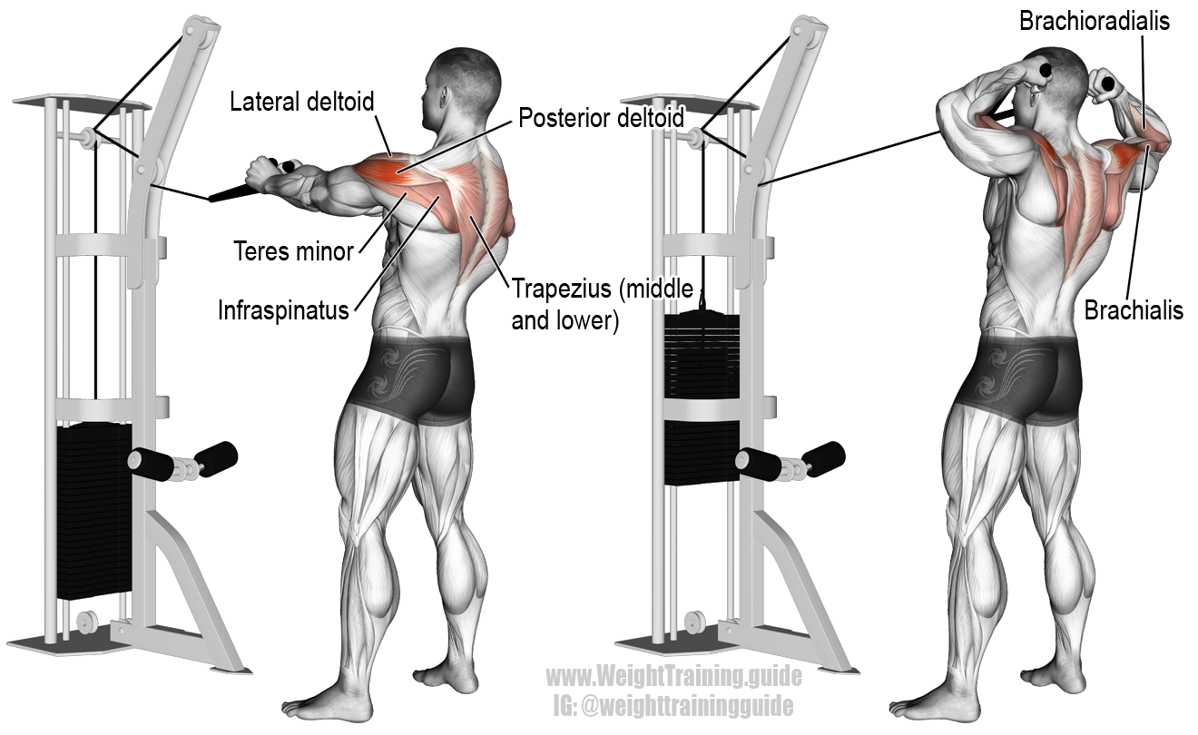 Cable face pull. A highly beneficial compound pull ...