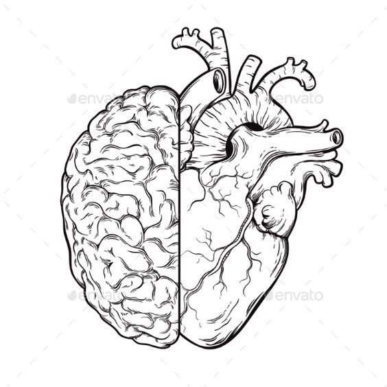 Photo of Human Brain and Heart Halves – Logic and Emotion – Miscellaneous Vectors