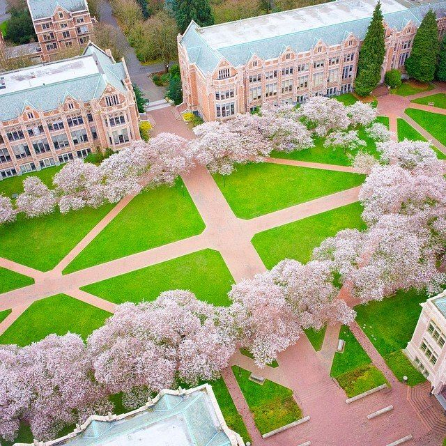 Another Beautiful Shot Of The Uw Campus With The Cherry Blossom Trees In Bloom Spring Has Spr University Of Washington College Architecture Evergreen State