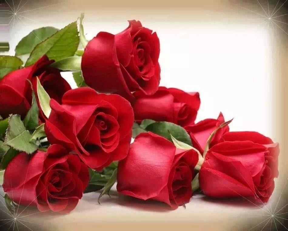 Pimpollos Rosas Rojas Flores Pinterest Rosas Rojas Rosas Y Rojo