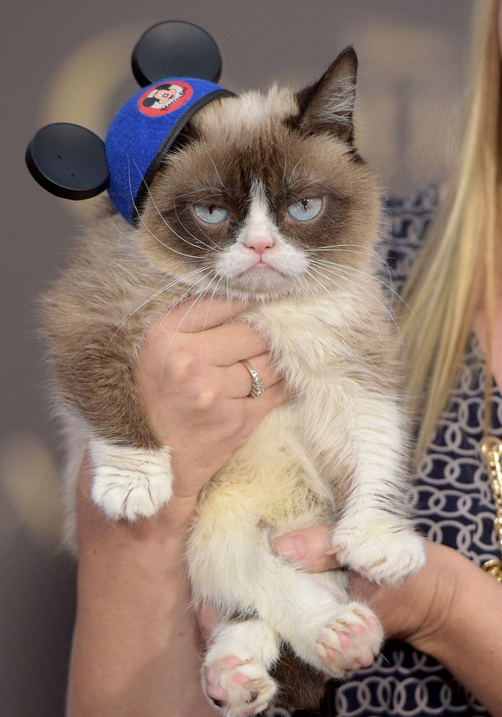 Look at All the Cute Celebrity Kids (and Grumpy Cat) at
