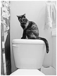 cat on toilet by carolesther #CatSprayingBakingSoda | Cat ...