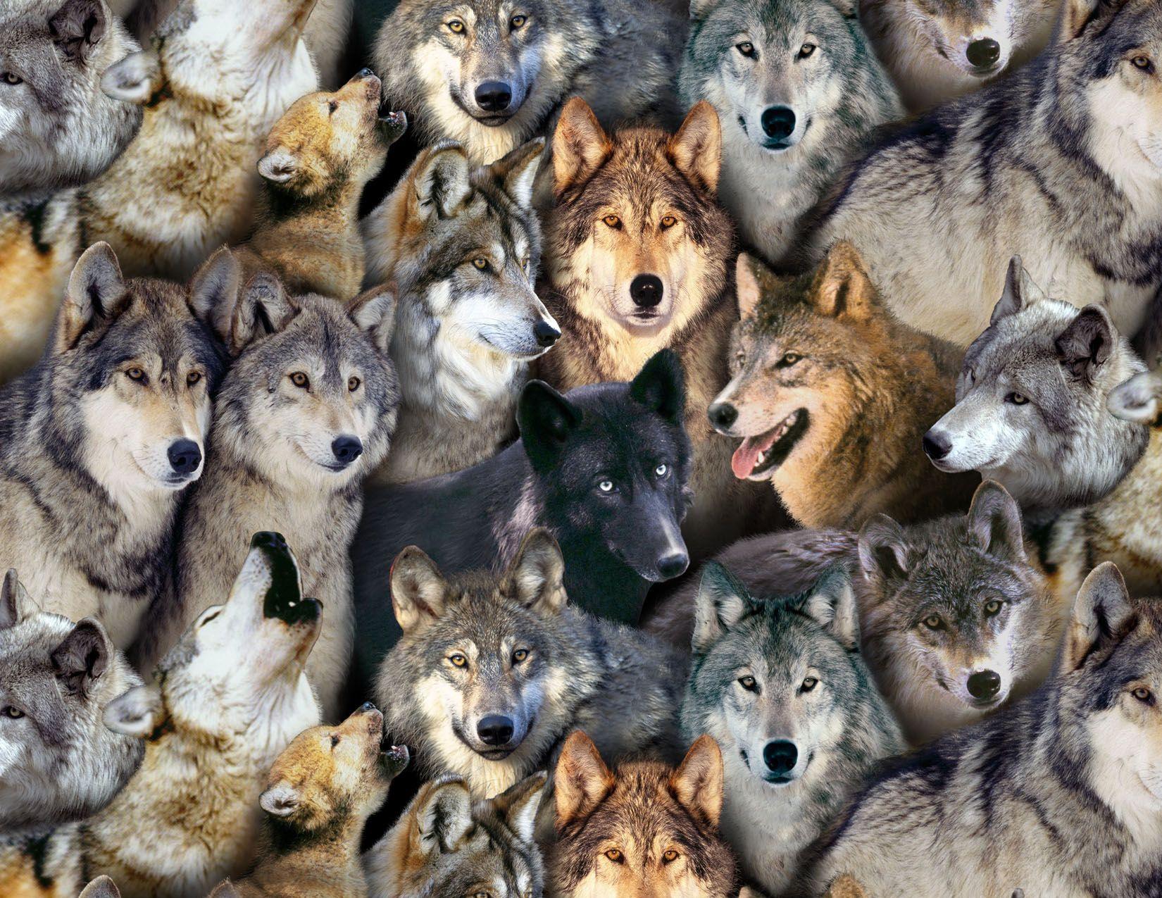 Wolf Fabric Elizabeth Studio North American Wildlife black