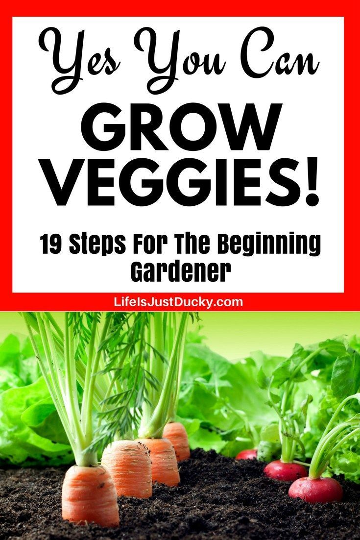 Delicieux 19 Tips For The First Time Gardener. How To Start Your First Vegetable  Garden. Grow Veggies In Your Own Backyard This Spring Andu2026