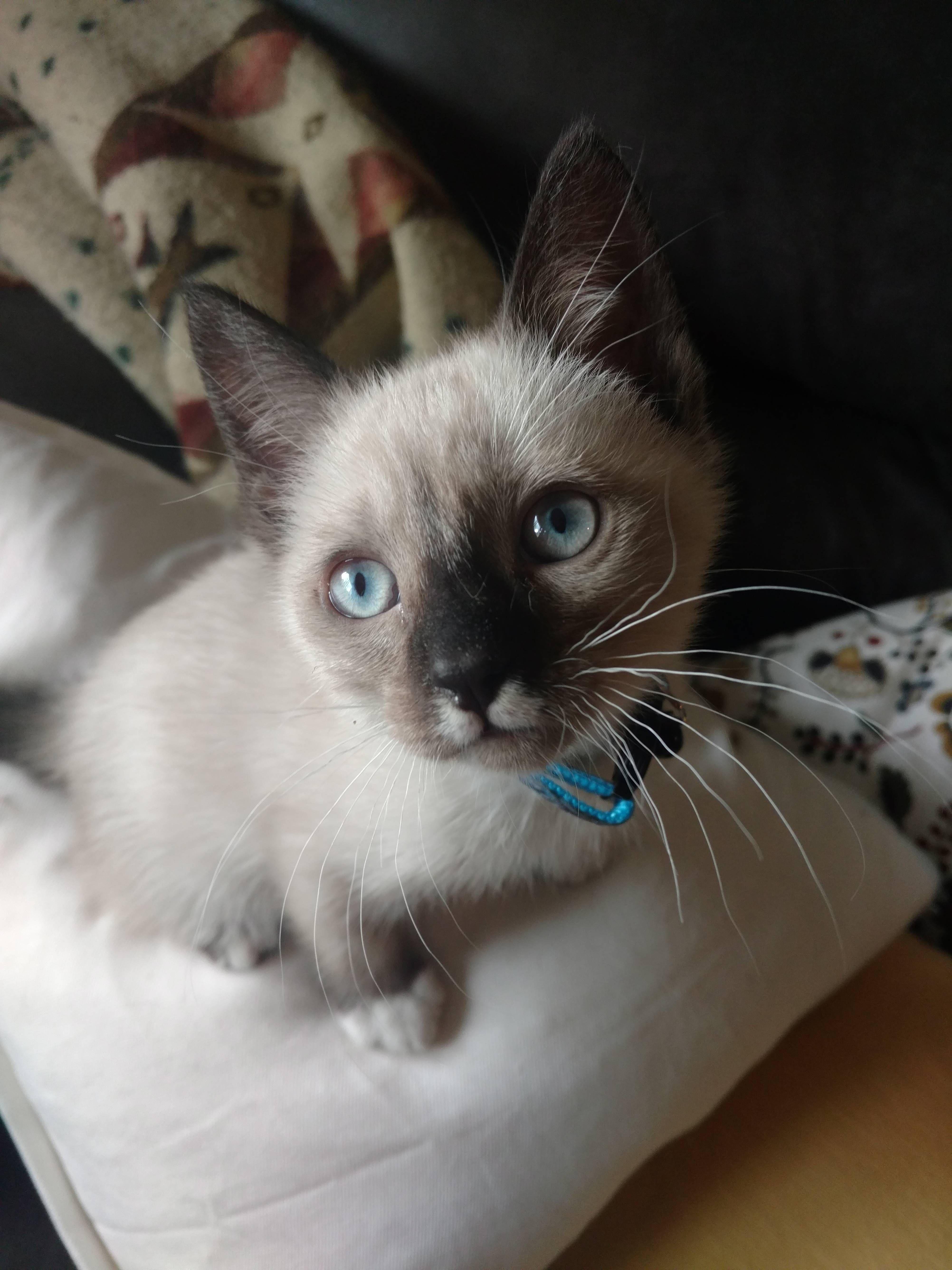 Kubo freshly adopted http://ift.tt/2qpmy37