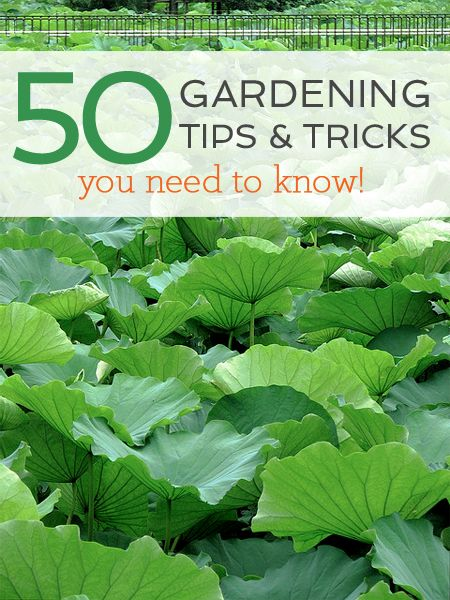 50 simple gardening tricks and tips you need to know! Some of these are genius!