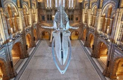62+ Ideas Natural History Museum London Dinosaurs Blue Whale For 2019 #historyofdinosaurs 62+ Ideas Natural History Museum London Dinosaurs Blue Whale For 2019 #history #historyofdinosaurs