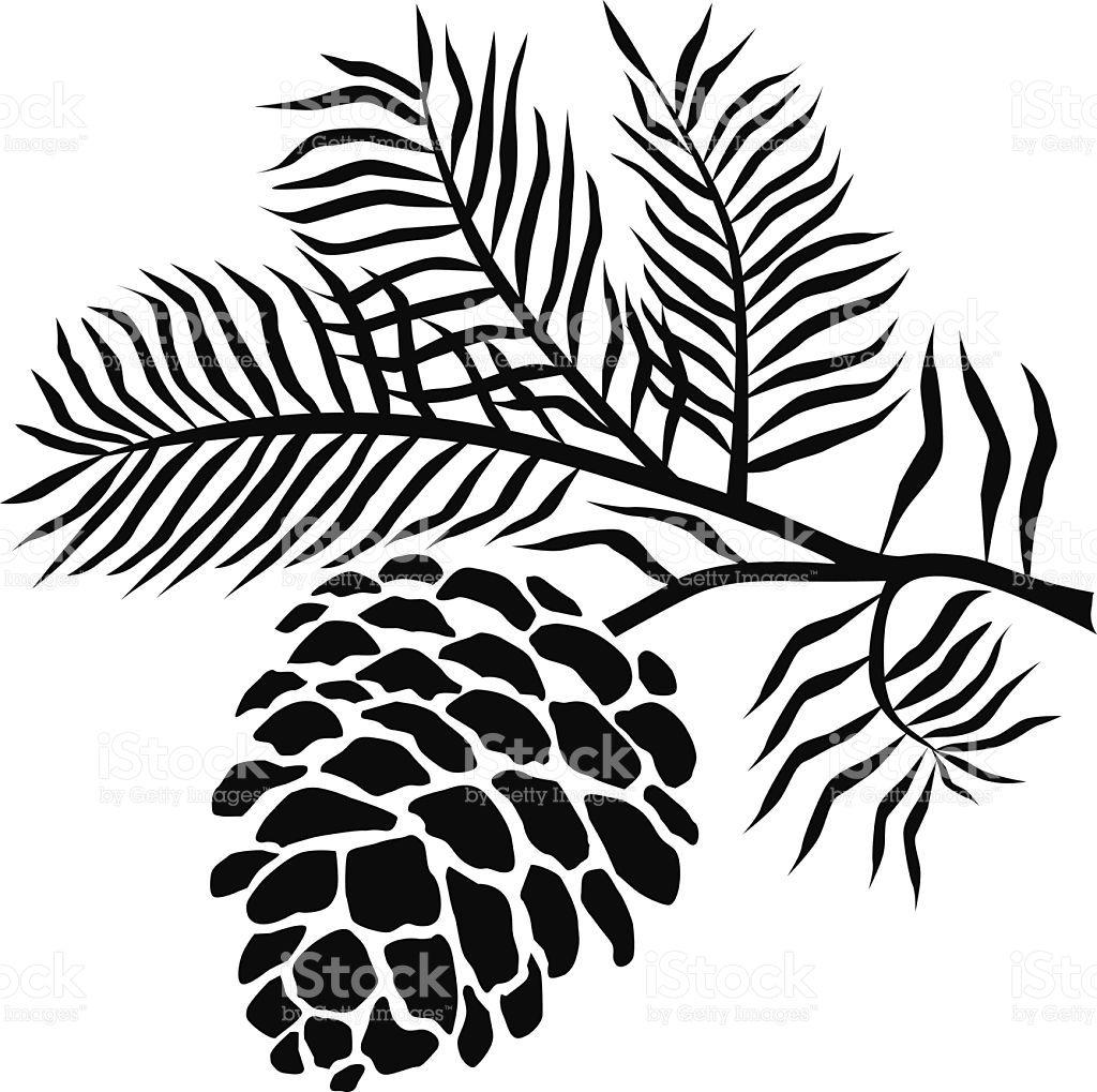 pineconeonbranchinblackandwhitevectorid537046381