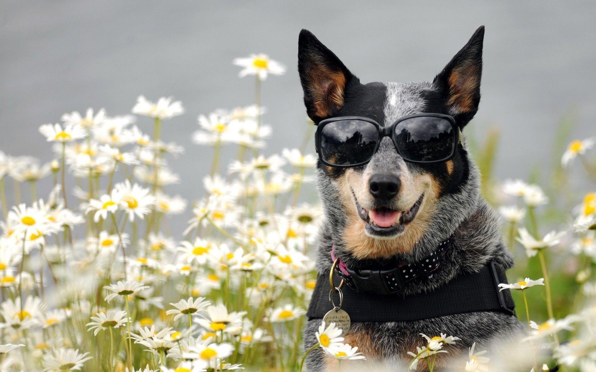 1920x1200 wallpaper dog, glasses, face, flowers | meglátogatandó