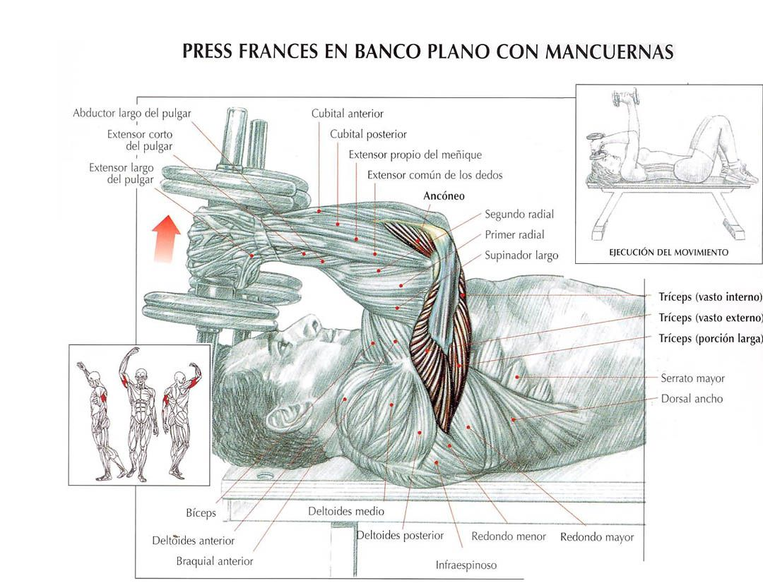 Press franc s en banco plano con mancuernas cpanameno for En y frances ejercicios