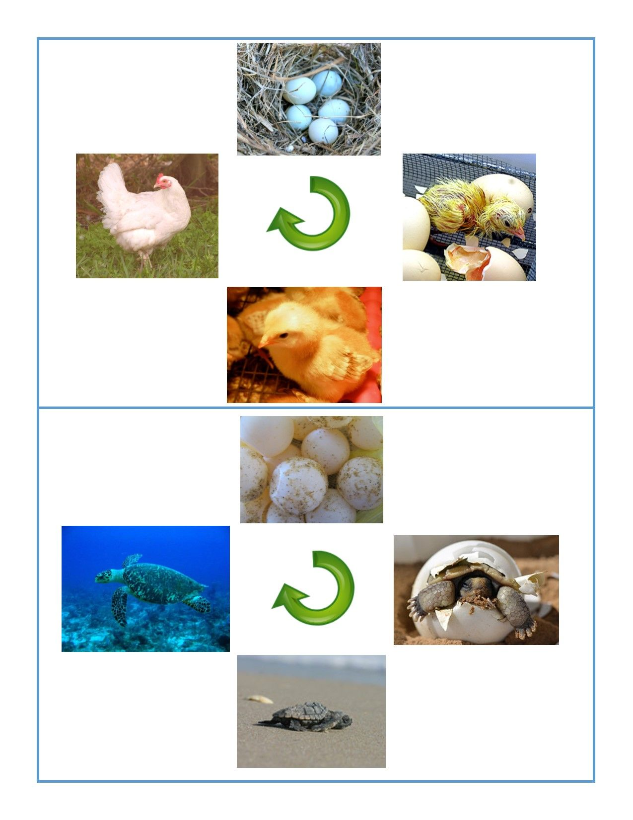 Life Cycle Cards With Images