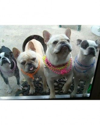 Mardi Gras Babes Boo Boo Toby Mr French And Miss Lucy Boston