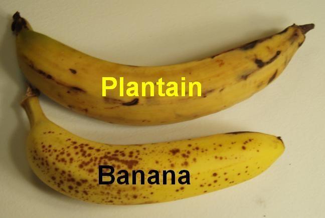 Pix For Ripe Plantain Vs Banana Ripe Plantain Plantains Banana