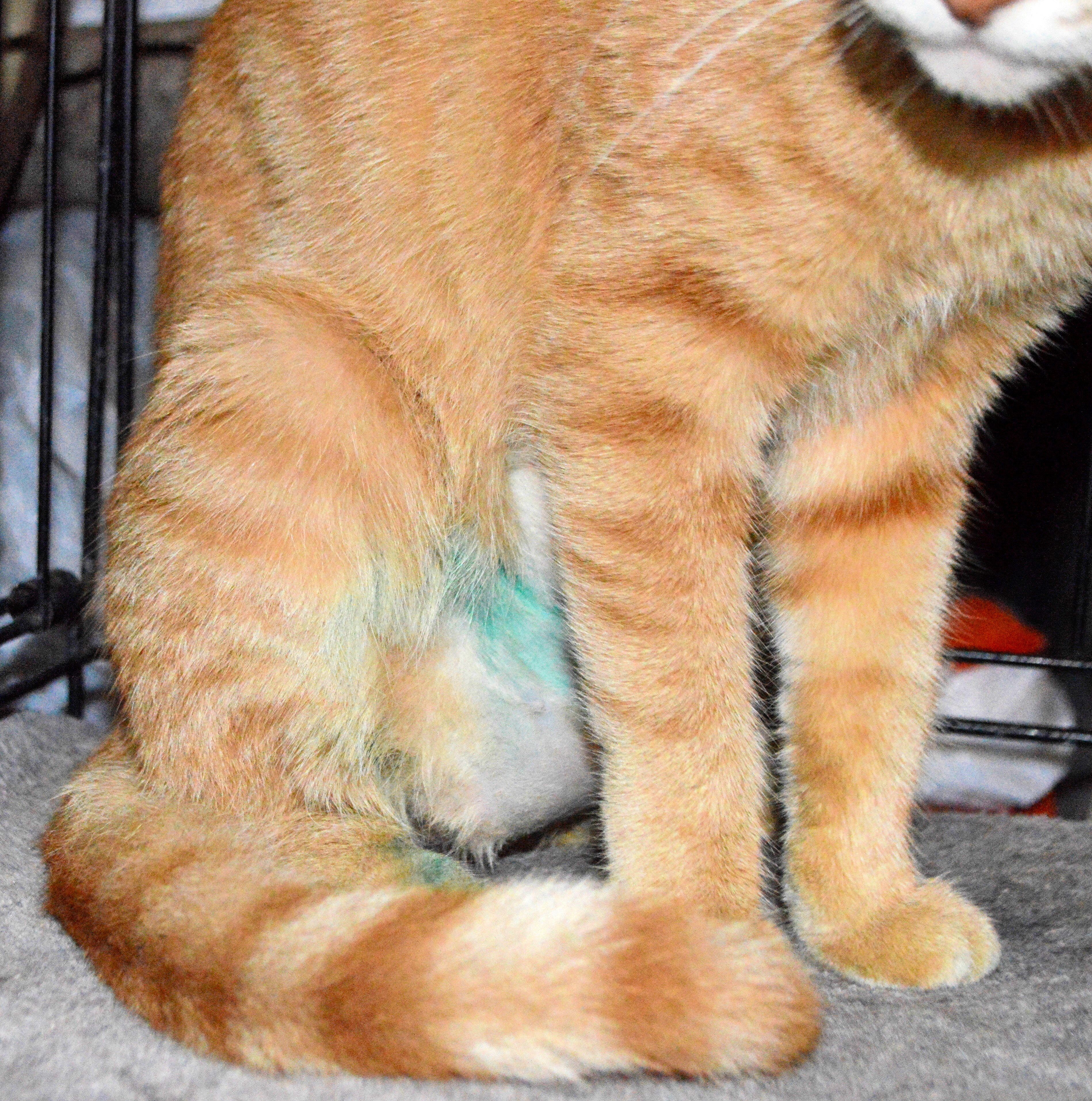 Pin By Anne Louise Ge Ene On Cats Cats Spay Animals