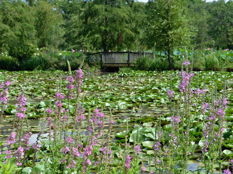 Kenilworth Park And Aquatic Gardens Map