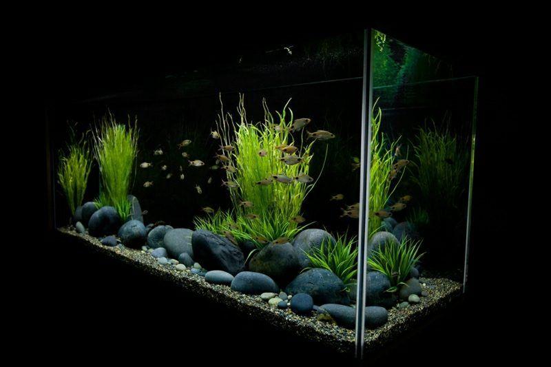 aquarium deko selber machen inspirierende ideen und tipps. Black Bedroom Furniture Sets. Home Design Ideas