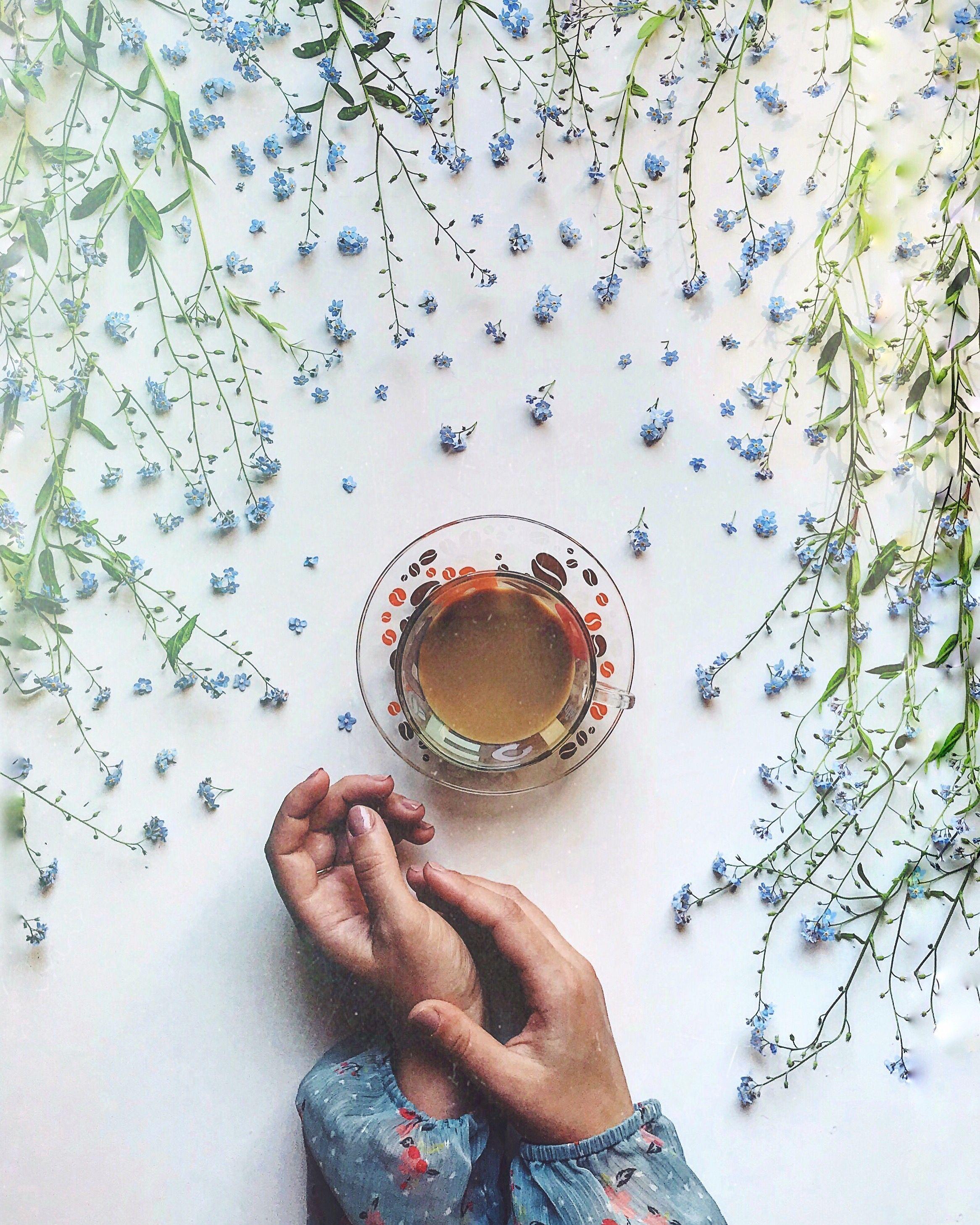 Nezhnye Cvety Fotografii Cvetov Cvety Instagram