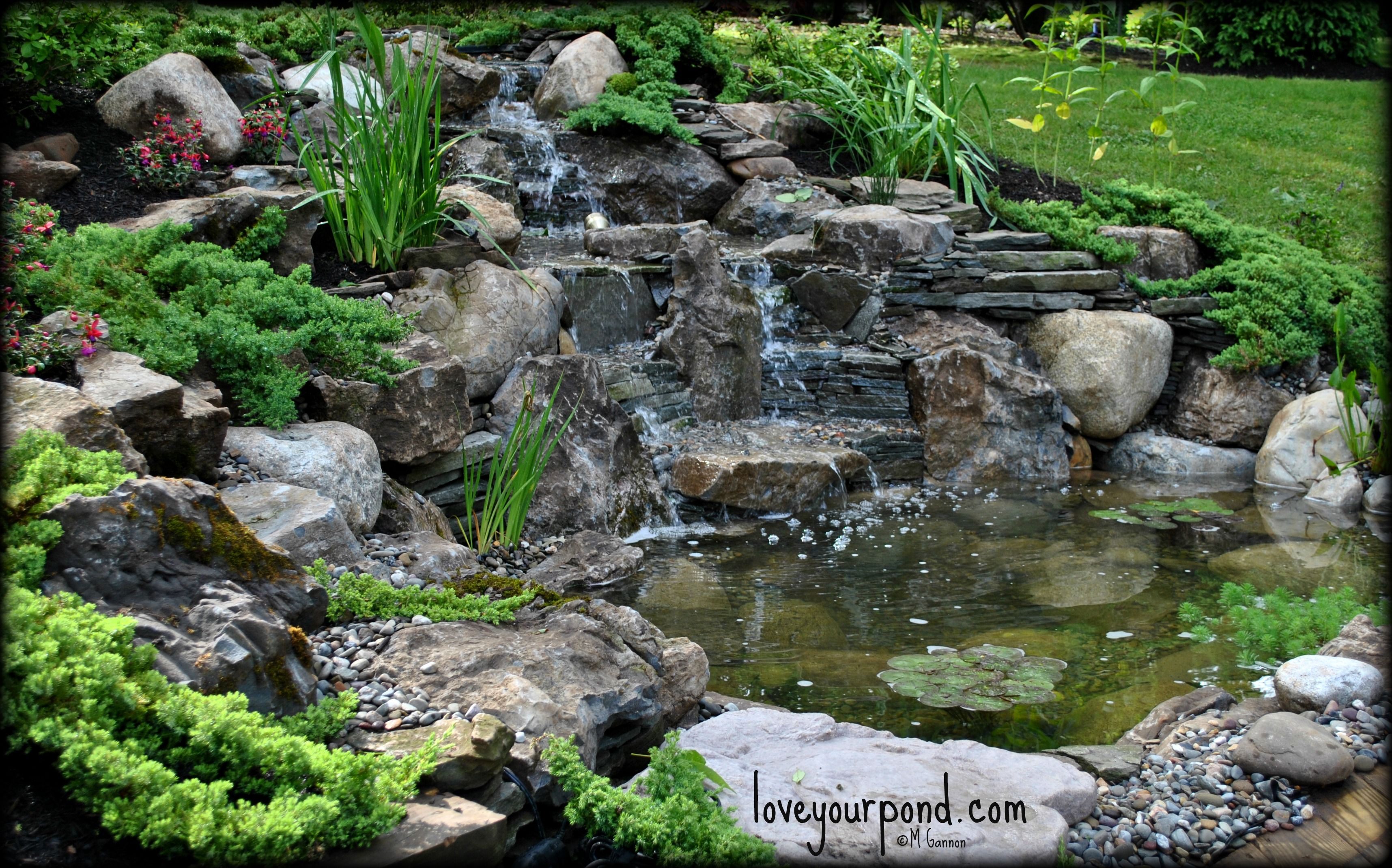 Moss rock waterfall pond designed and installed by full for Rock waterfall pond