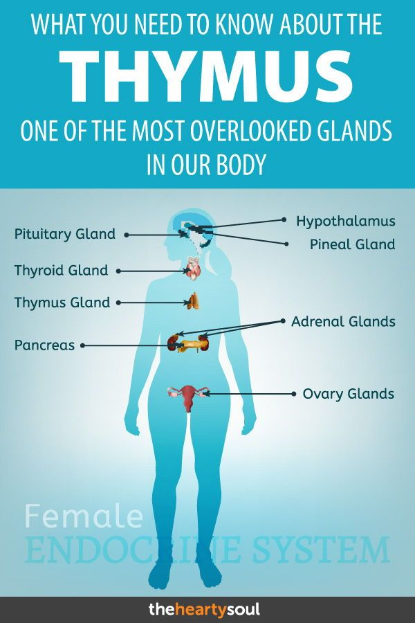 What You Need To Know About The Thymus A Gland No One Talks About
