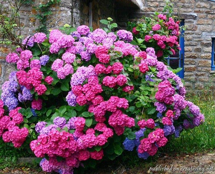 Самые красивые цветы в мире Интересные факты 9