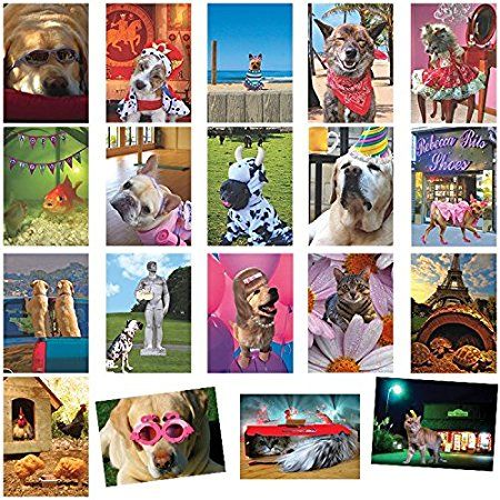 Animal Alley All Occasion Humorous Greeting Card Value Assortment Value Box Of 20 Cards Animals Funny Birthday Cards Birthday Humor