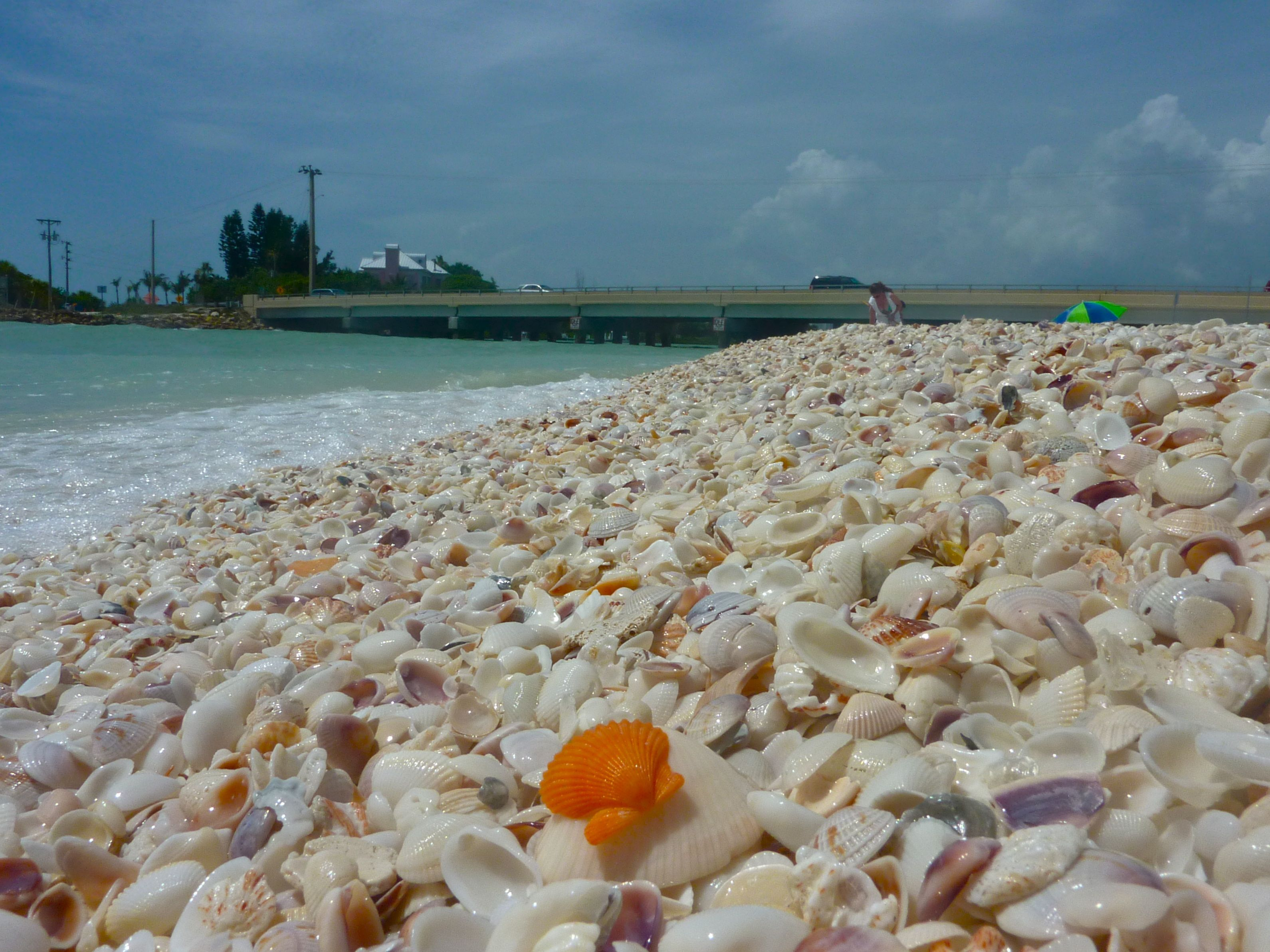 Blind P Beach Sanibel Island Picture Fossilzed Shark Teeth Check Out Tripadvisor Members Candid Photos And Videos Of