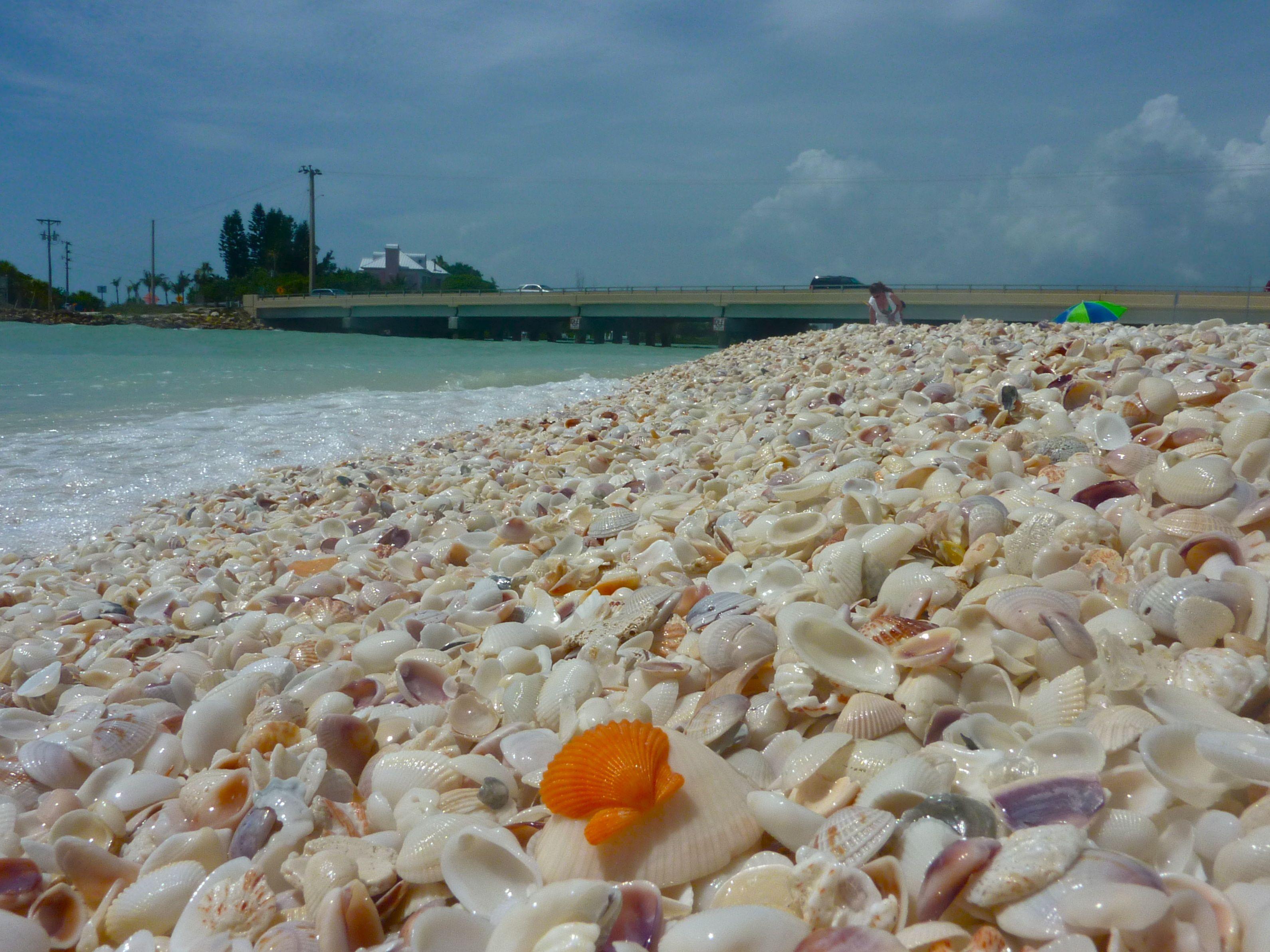 Shells Along The Beach At Sanibel Island