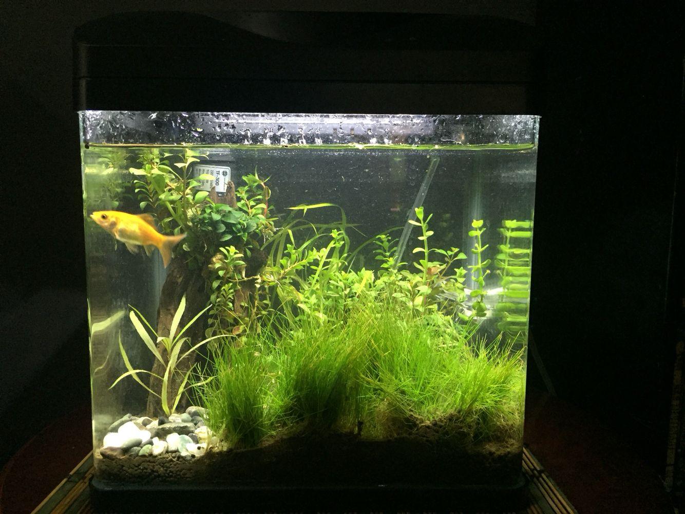 5 Gallon Tank With Aquascape Pump And Co2 Set Aquarium Planted Ziolite Dan