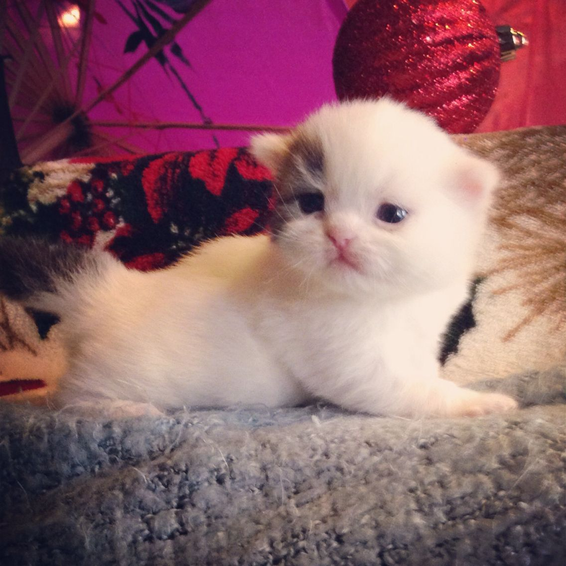 Pin by April Leshaun on ♡Adorable♡ Kittens cutest, Cat