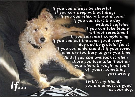 10 Are Dogs Better Than Humans Quora Dog Poems Cutest Puppy
