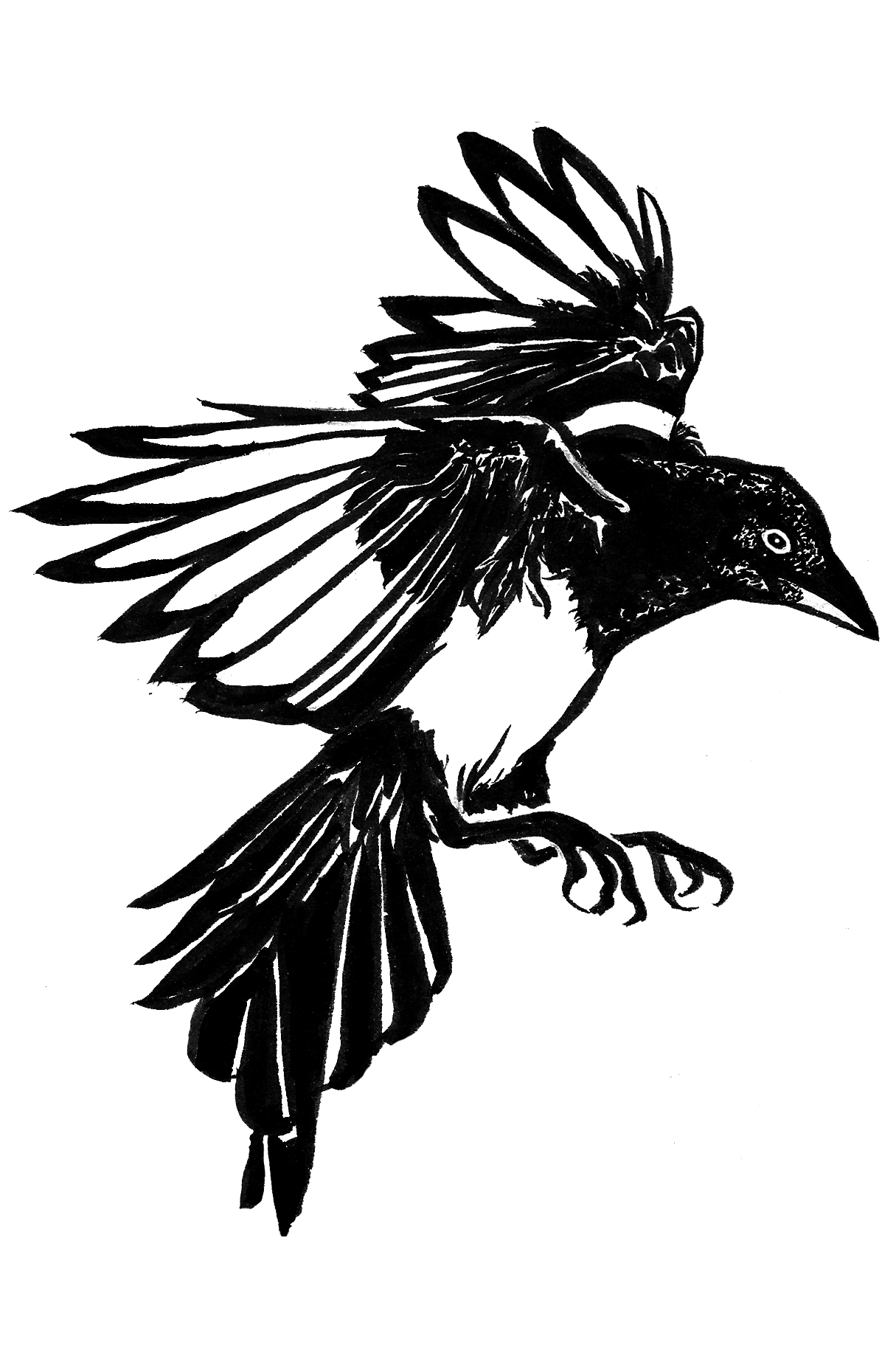 magpie-tattoo.png (1215×1834)
