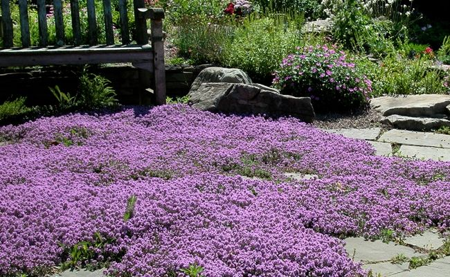 7 Varieties Of Easy Ground Covers To Enhance Any Landscape