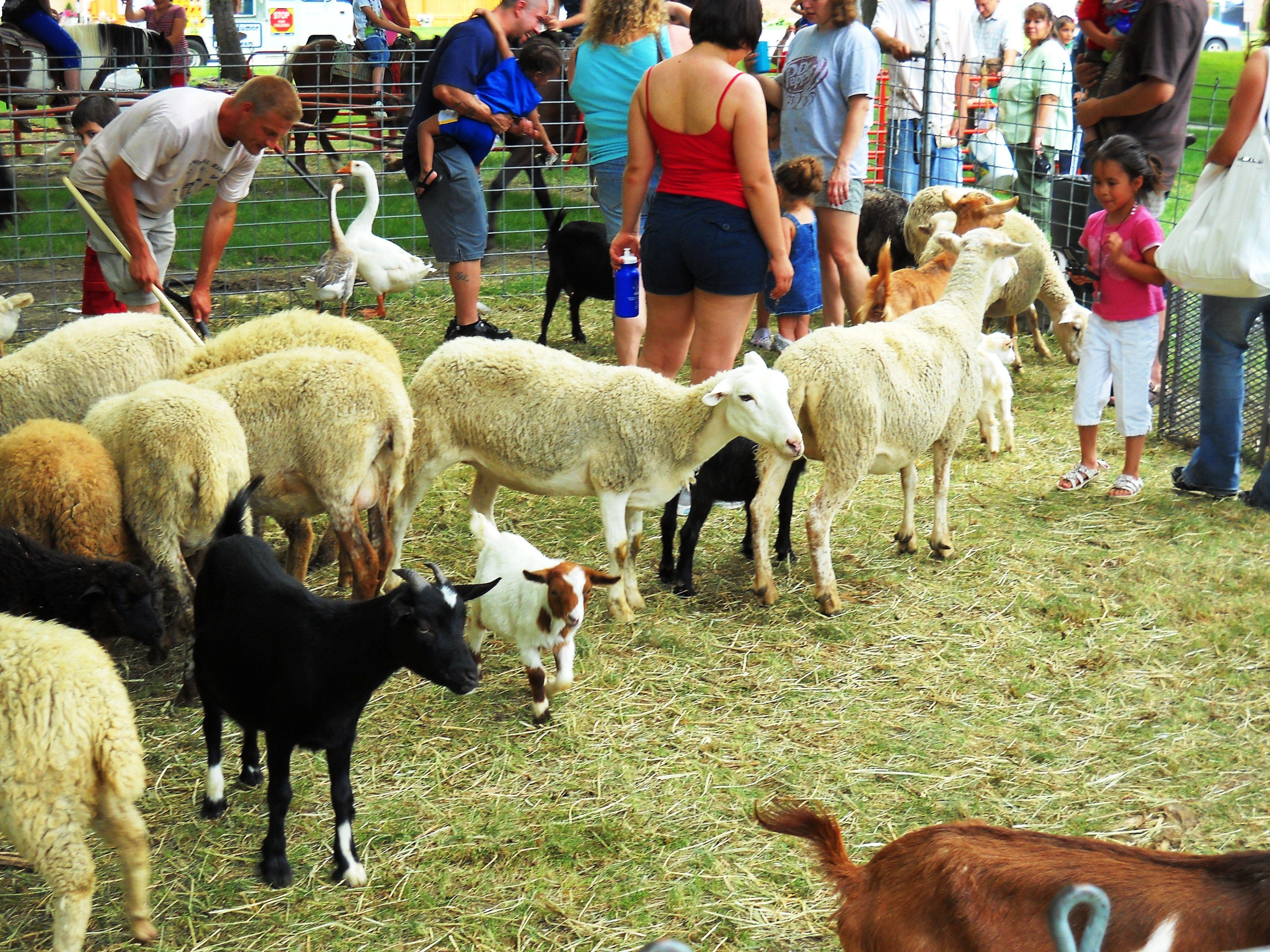 Petting Zoo Chicago Party Rentals Event coordinator