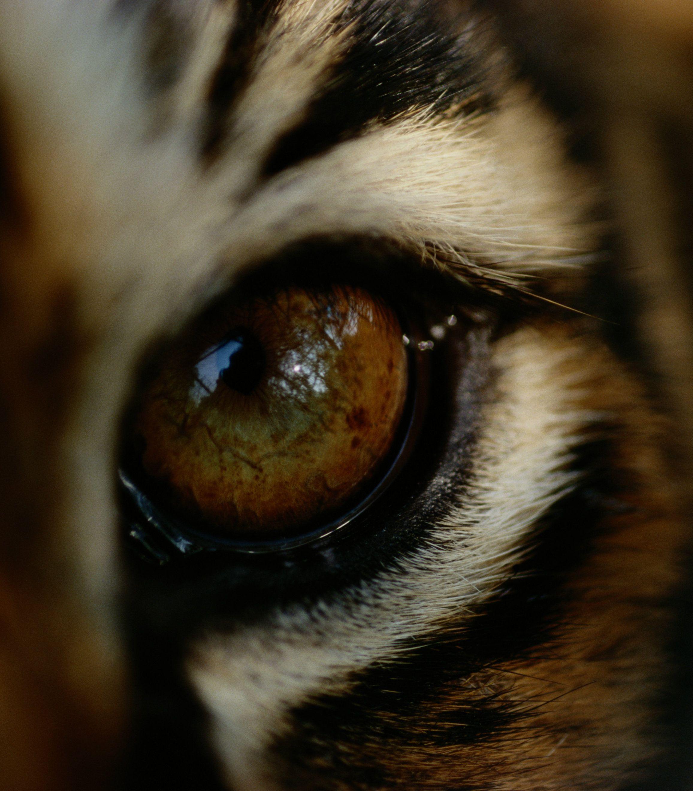 Tiger S Eye Internationaltigerday Bigcats Wwf Tiger Animals