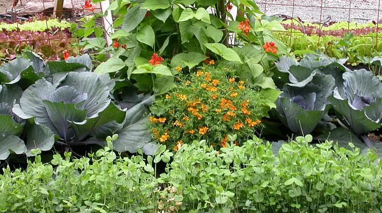 A Basic Vegetable Garden Layout And Planning Guide Https