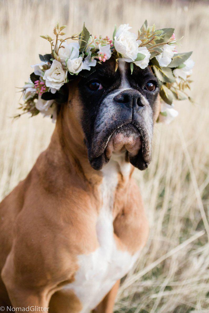Diy dog flower collar wedding dog flower crown pet flower