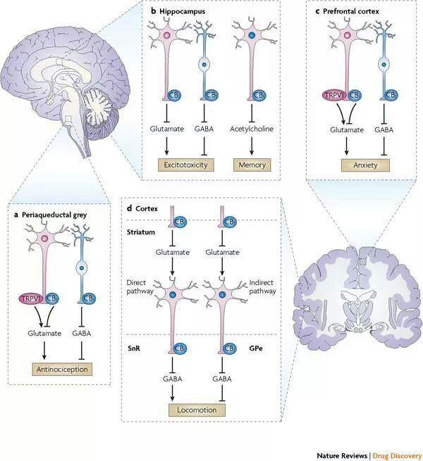 Where in the brain