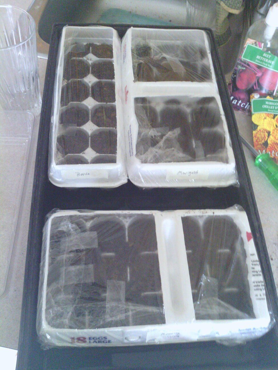 Homemade mini greenhouses made from egg cartons plastic for Homemade greenhouse plastic