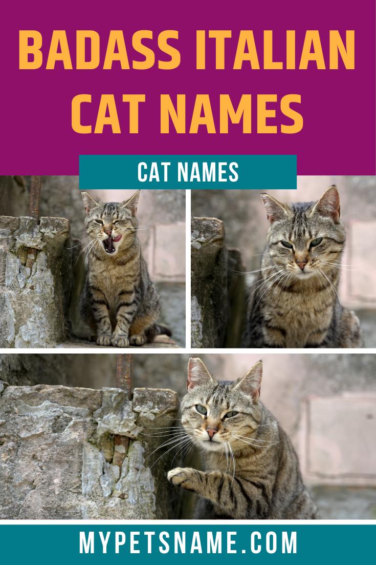 Badass Italian Cat Names In 2020 Cat Names Cats Pet Names