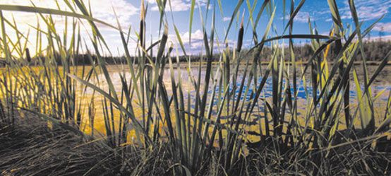 Pasture Reclamation Arkansas Valley Seed Grass Species Grass Seed Garden Inspiration