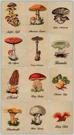 BFC1226 A Dozen Mushrooms
