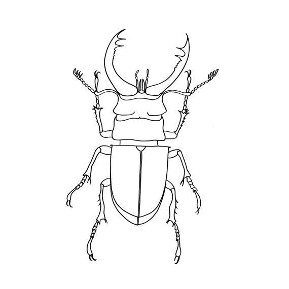 Stag Beetle Print Art Print Insect Print Black and von