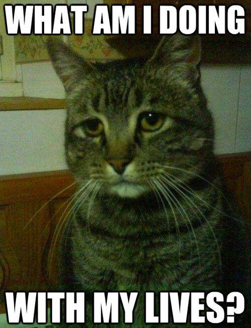 25 Best Memes About Cat In The Hat Bat Meme Green Screen