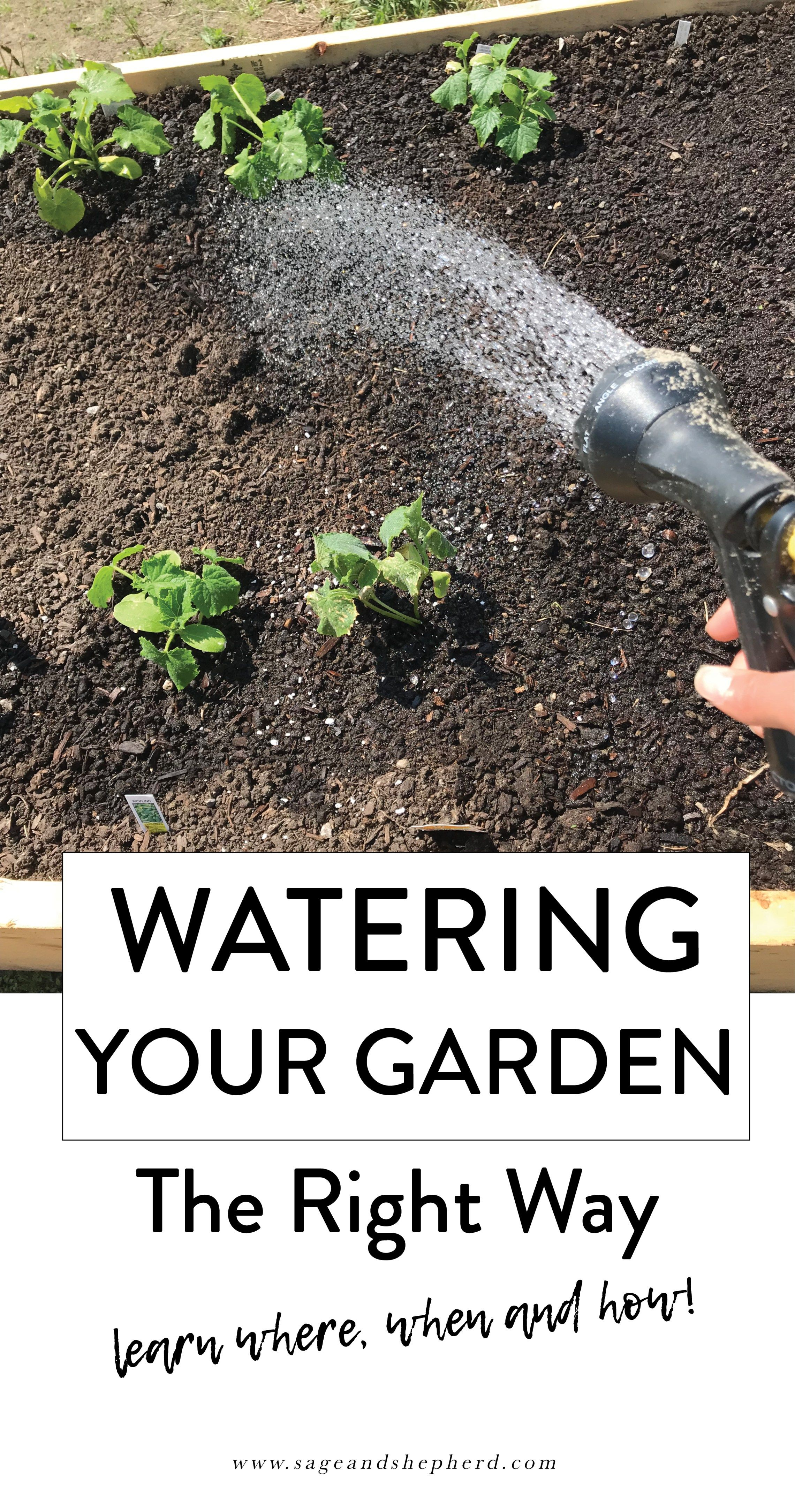 How to Water Your Vegetable Garden the Right Way  Vegetable