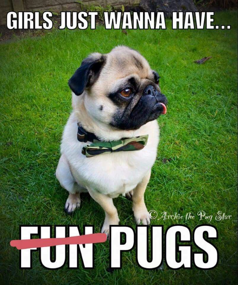 Girls Just Want To Have Fun I Mean Pugs Adoptioncosts Pugs