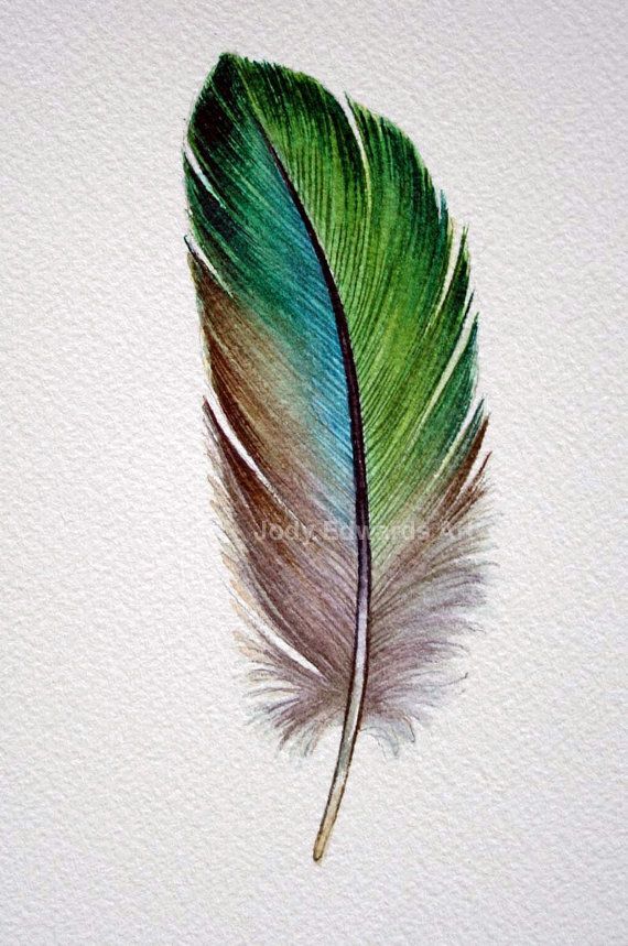 Parrotlet Feather Study Original Watercolour Painting Feathers